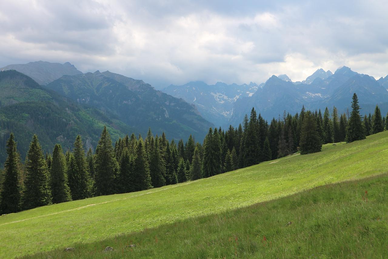 Na Gęsią Szyję - szlak zielony 50 min