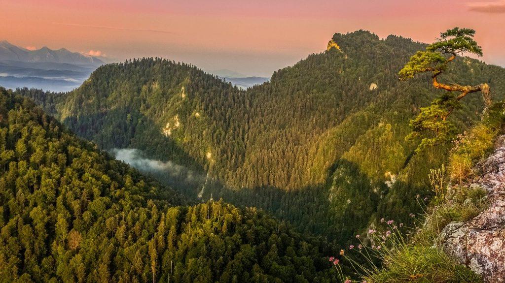 Sokolica - góra słynąca z sosenki