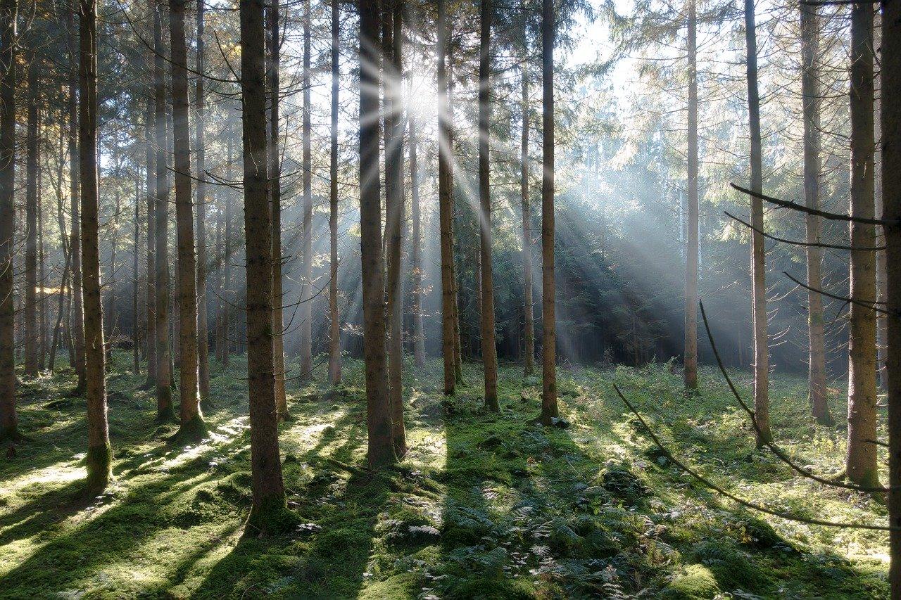 Przyroda charakterystyczna dla Babiej Góry