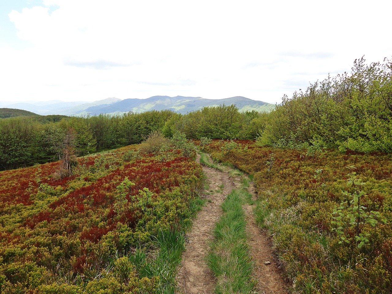 Jakie są główne szlaki w Bieszczadach?