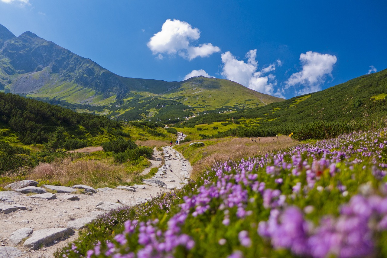 dolina-chochołowska-kwitnace-krokusy.jpg