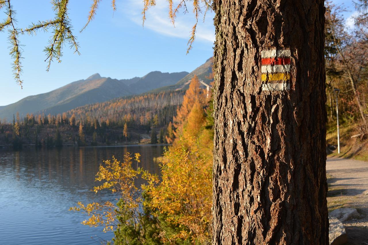 oznakowanie szlaku na drzewie