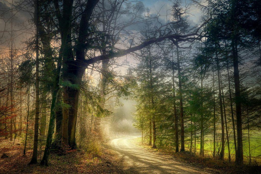 Długa droga przez las