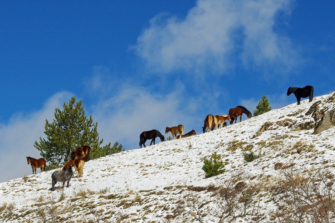 Konie we wloskich gorach