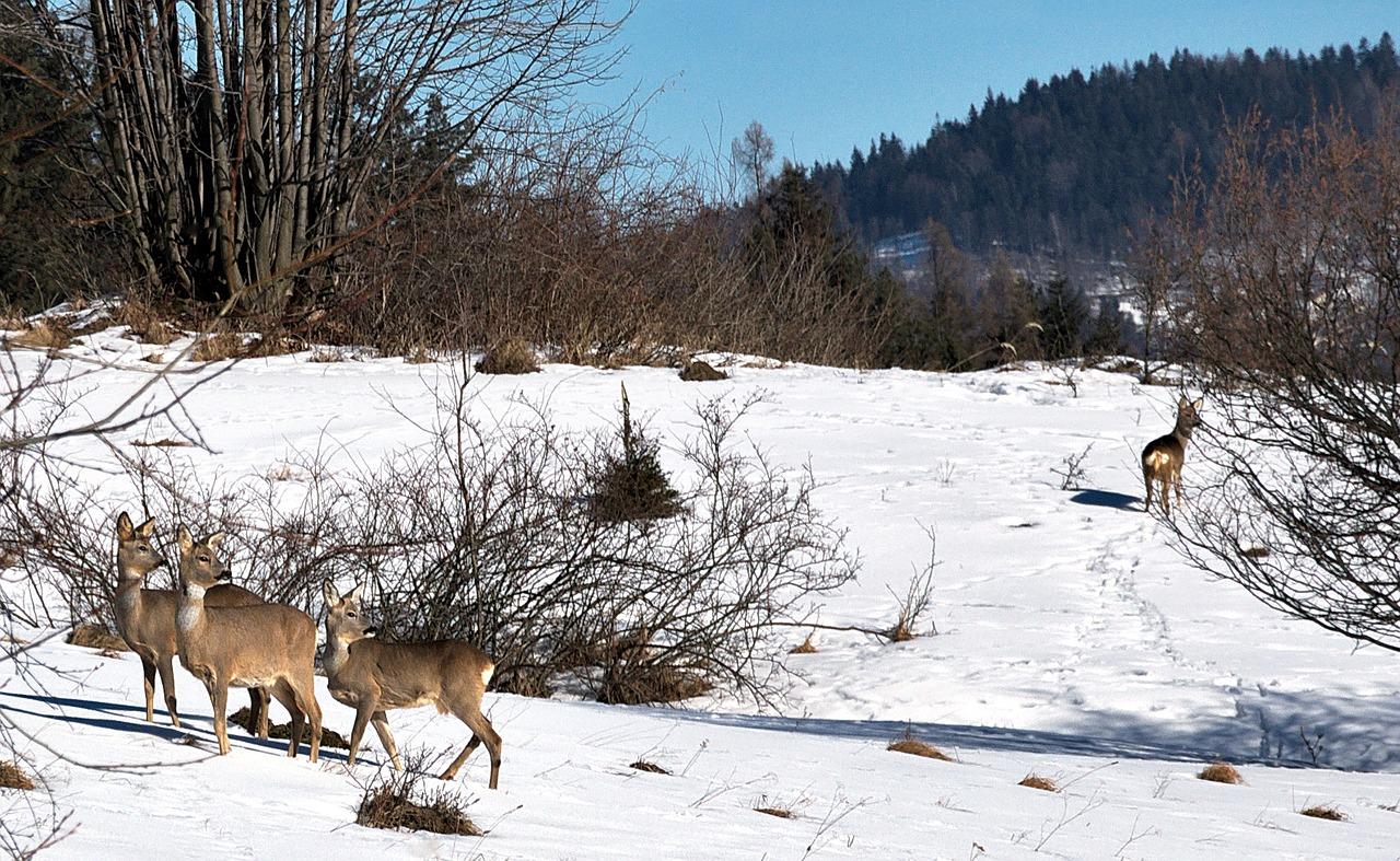 Jelenie zima w gorach