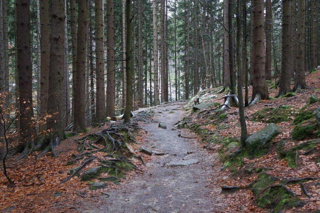 ścieżka górska w lesie