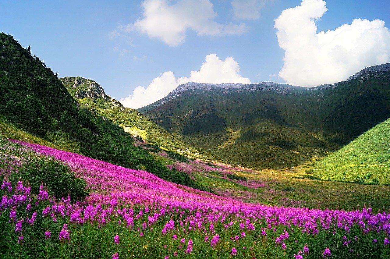kwiecista gorska polana