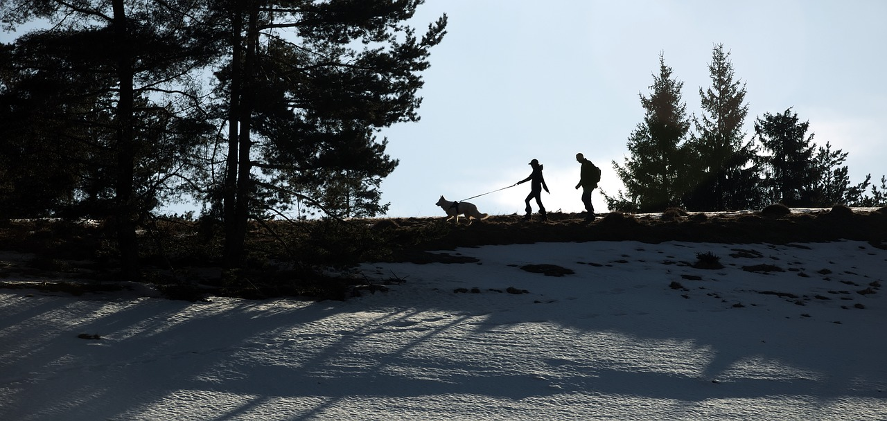 Spacer z psem zima