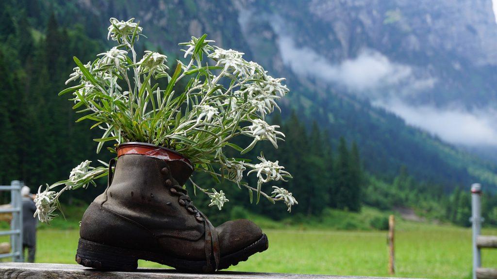 doniczka z butów trekkingowych